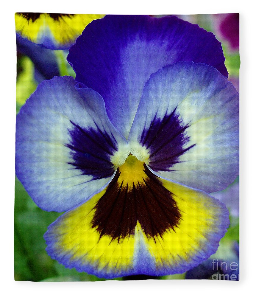 Flowers Fleece Blanket featuring the photograph Blue And Yellow Pansy by Nancy Mueller