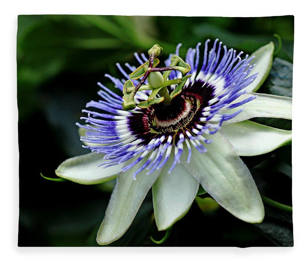 Blue Crown Passion Flower Fleece Blanket For Sale By Debbie Oppermann