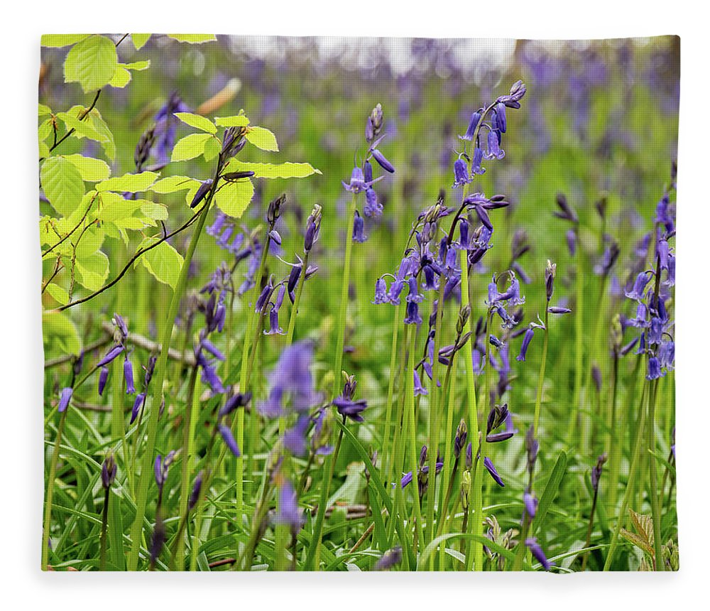 Judy Woods Fleece Blanket featuring the photograph Bluebells In Judy Woods by Mike Walker