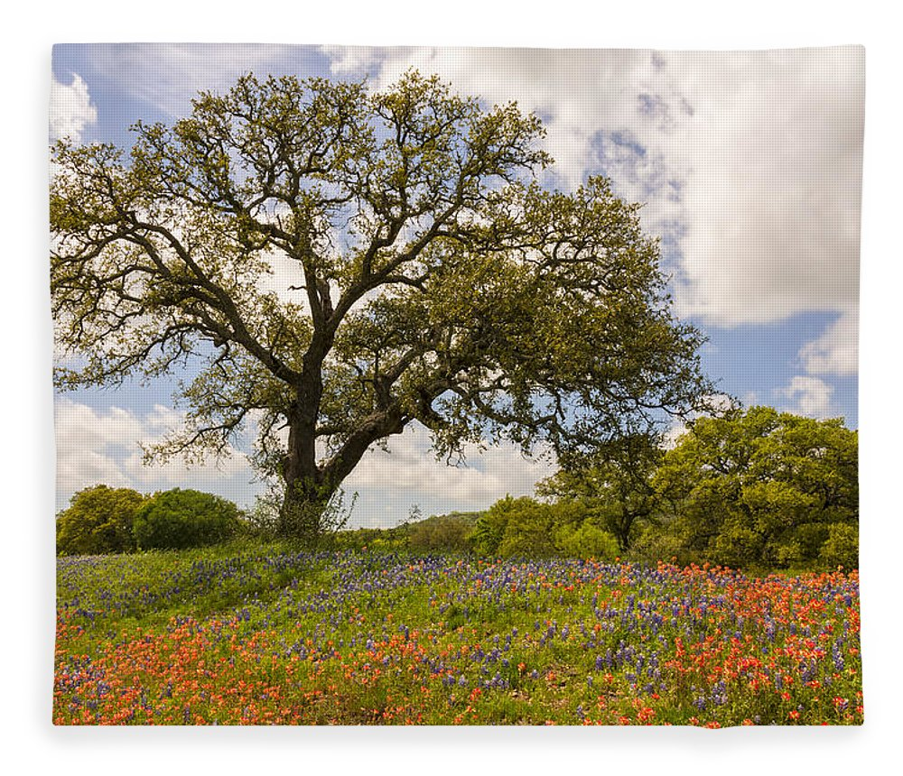Bluebonnet Fleece Blanket featuring the photograph Bluebonnets Paintbrush And An Old Oak Tree - Texas Hill Country by Brian Harig