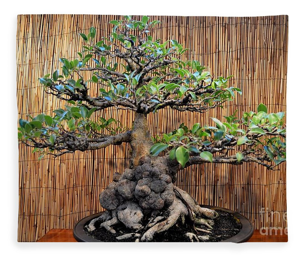 Bonsai Dwarf Banyan Tree Fleece Blanket For Sale By Mary Deal