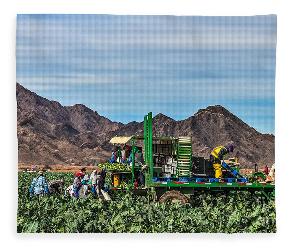 Healthy Fleece Blanket featuring the photograph Broccoli Harvest by Robert Bales