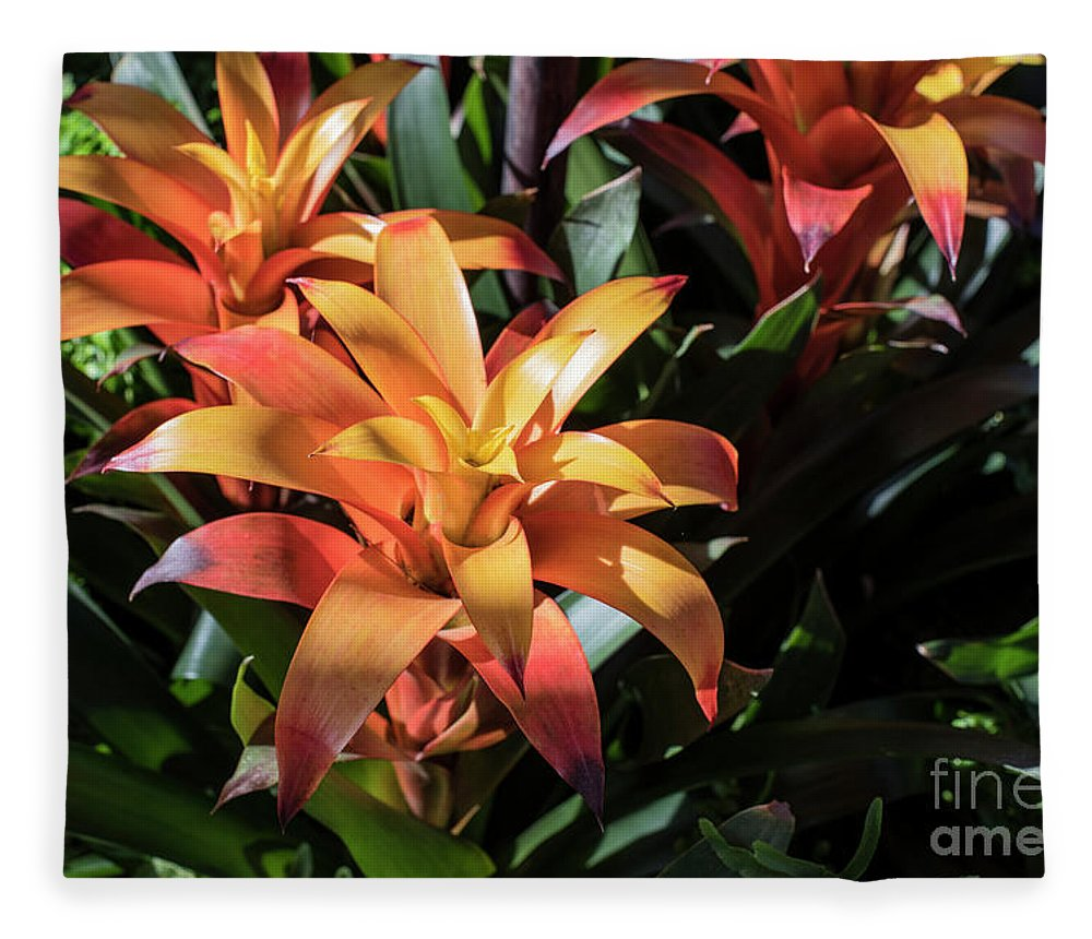 Succulent Fleece Blanket featuring the photograph Bromeliads by Judy Wolinsky