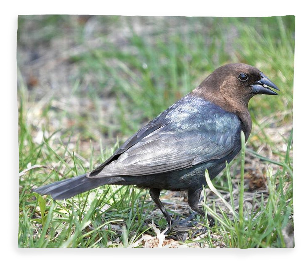 Animal Fleece Blanket featuring the photograph Brown-headed Cowbird 2 by Bonfire Photography