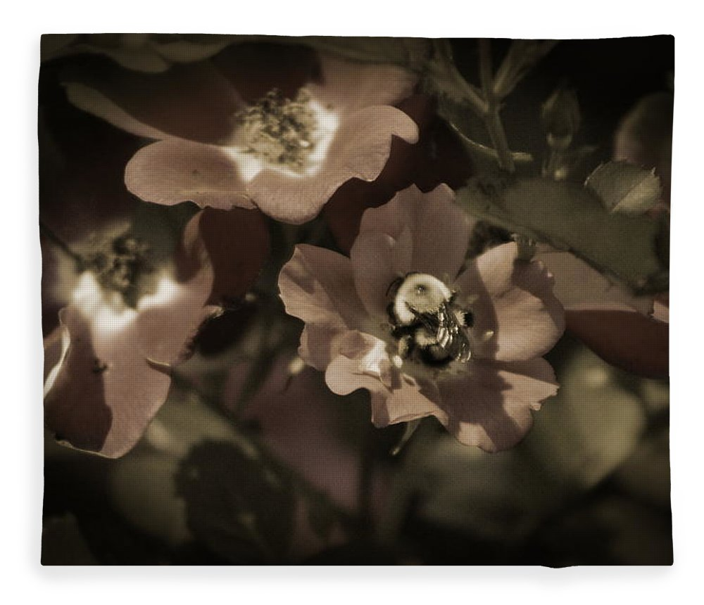 Sepia Fleece Blanket featuring the photograph Bumblebee on Blush Country Rose in Sepia Tones by Colleen Cornelius