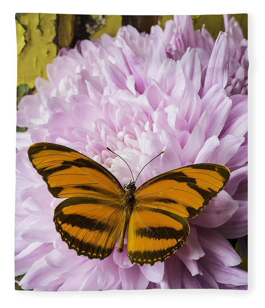 Pink Fleece Blanket featuring the photograph Butterfly On Snowball Mum by Garry Gay