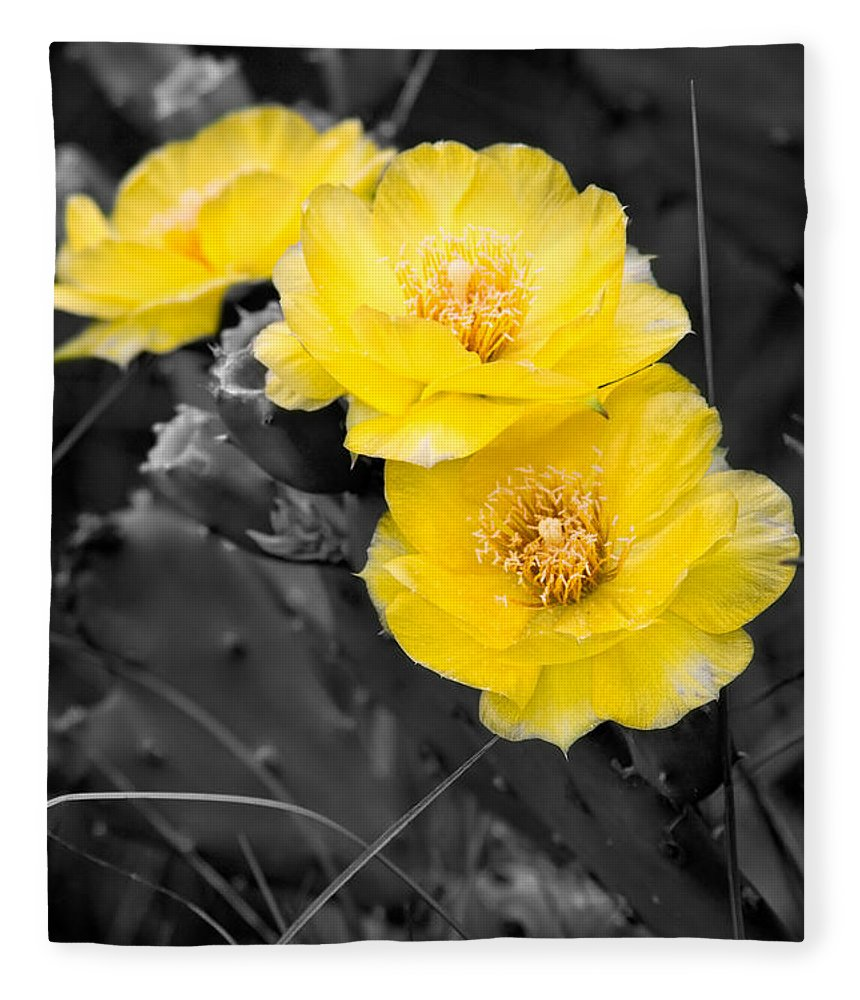 Cactus Fleece Blanket featuring the photograph Cactus Blossom by Christopher Holmes