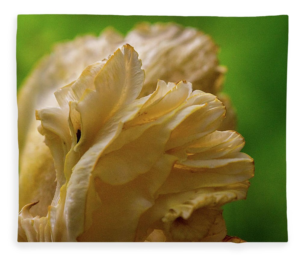 Cantharellus Fleece Blanket featuring the photograph Cantharellus Gills Section by Douglas Barnett