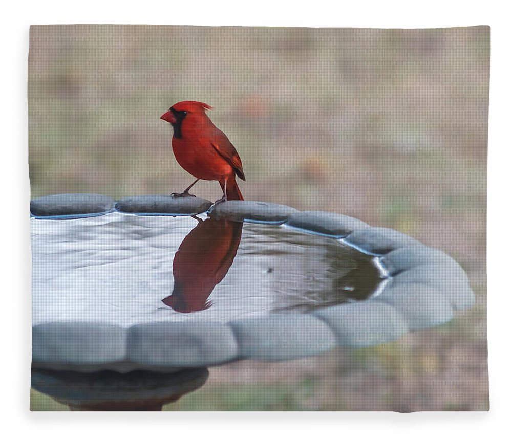 Terry Deluco Fleece Blanket featuring the photograph Cardinal Reflection by Terry DeLuco