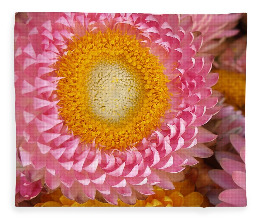 Flower Fleece Blanket featuring the photograph Carmel Flower by Sarah Madsen