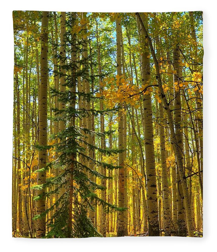 Aspen Fleece Blanket featuring the photograph Charlie Brown by David Ross