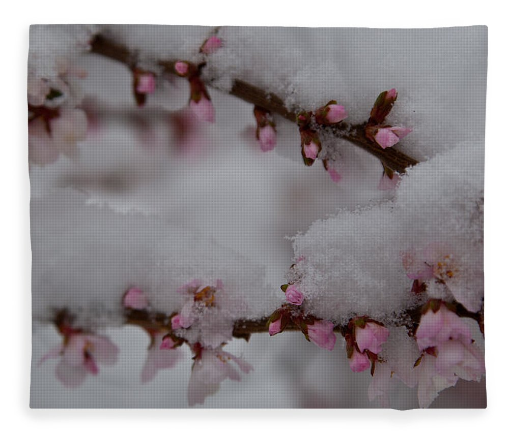 Cherry Fleece Blanket featuring the photograph Cherry Blossom And Snow Elegance 3 by Cascade Colors