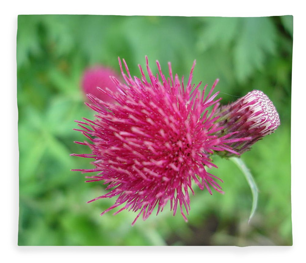 Thistle Fleece Blanket featuring the photograph Cirsium Burgandy Thistle by Susan Baker