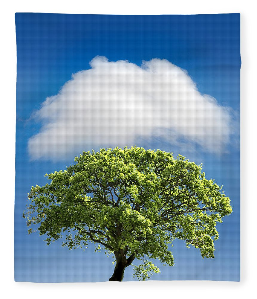 Tree Fleece Blanket featuring the photograph Cloud Cover by Mal Bray