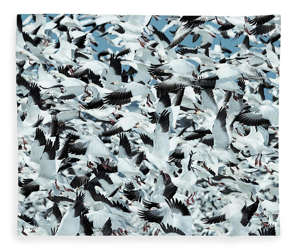 Snow Fleece Blanket featuring the photograph Controlled Chaos by Everet Regal
