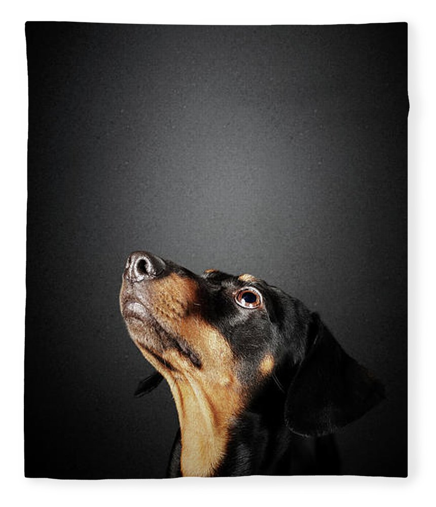 Dachshund Fleece Blanket featuring the photograph Dachshund Looking Up At Salami by Johan Swanepoel