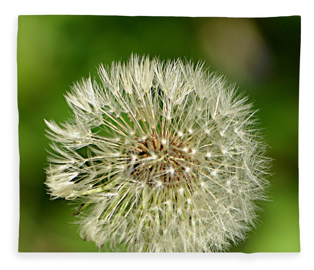 Dandelion Puff Fleece Blanket featuring the photograph Dandelion Puff by Ally White