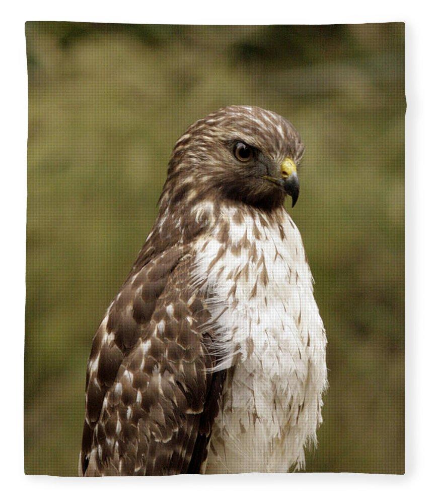 Bird Fleece Blanket featuring the photograph Dark Beauty by Phill Doherty