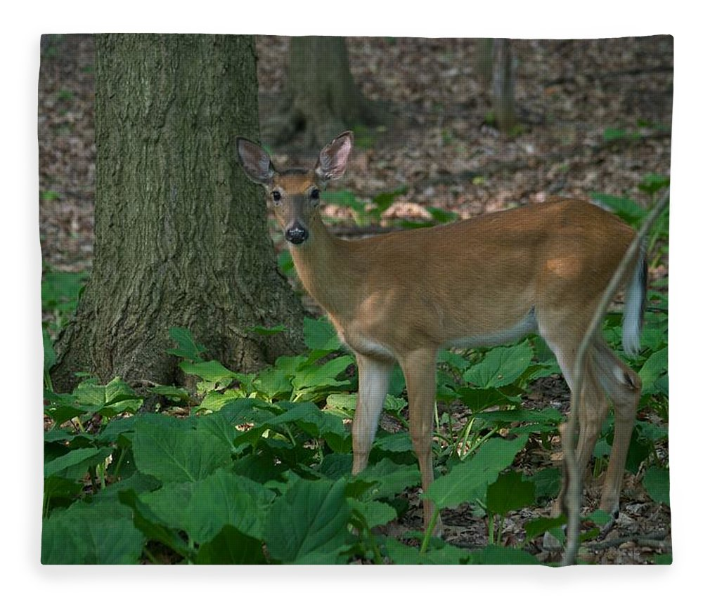 Animal Fleece Blanket featuring the photograph Deer 7414 by Michael Peychich