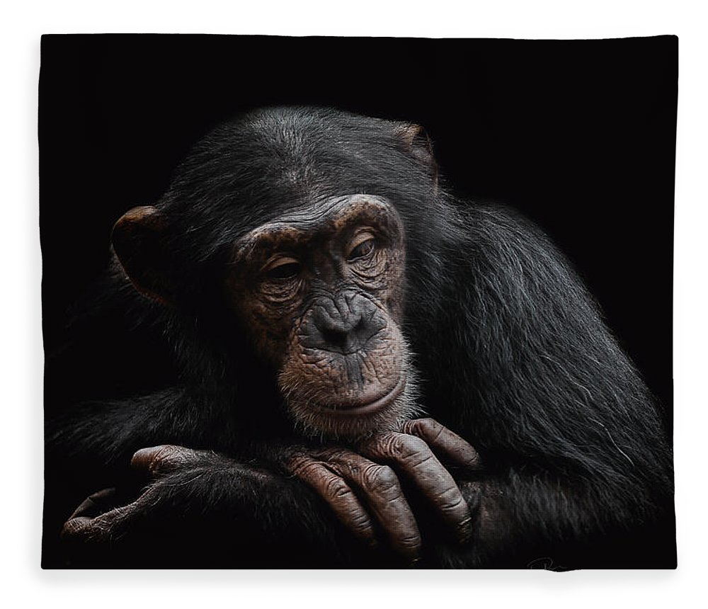 Chimpanzee Fleece Blanket featuring the photograph Depression by Paul Neville