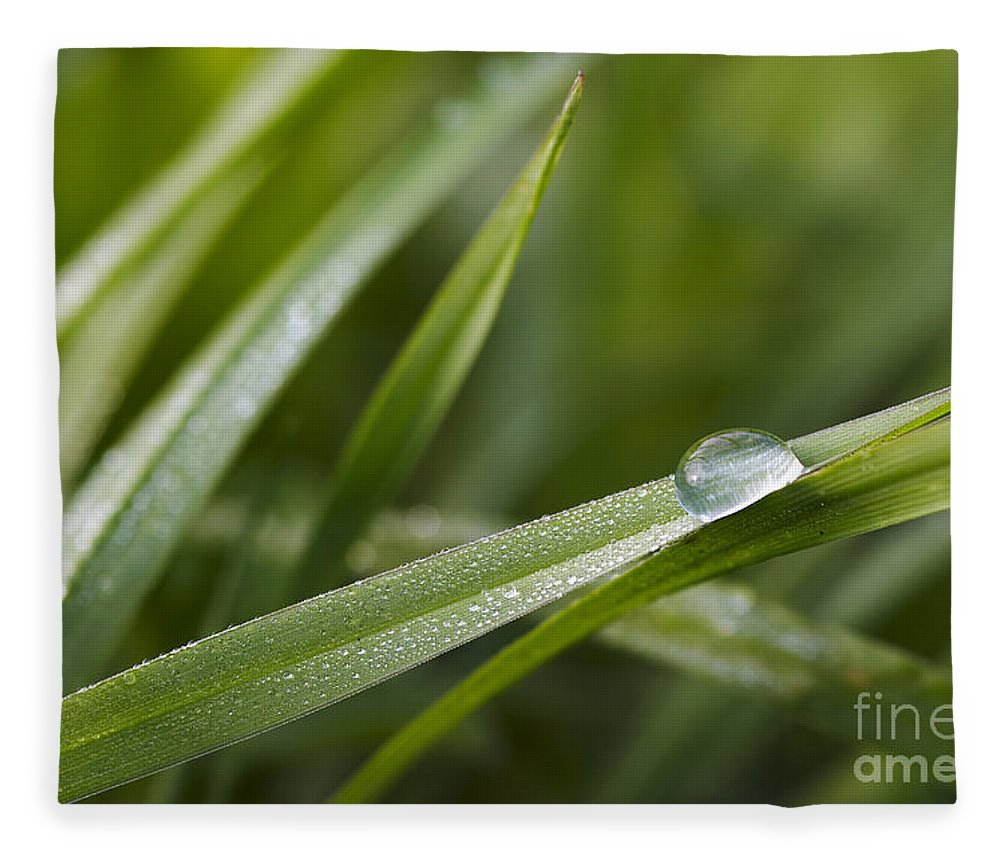 Grass Fleece Blanket featuring the photograph Dewy Drop On The Grass by Michal Boubin