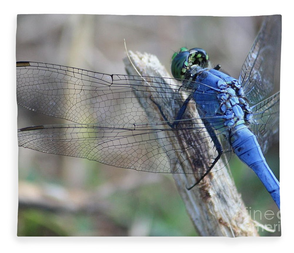 Dragonfly Fleece Blanket featuring the photograph Dragonfly Wing Detail by Carol Groenen