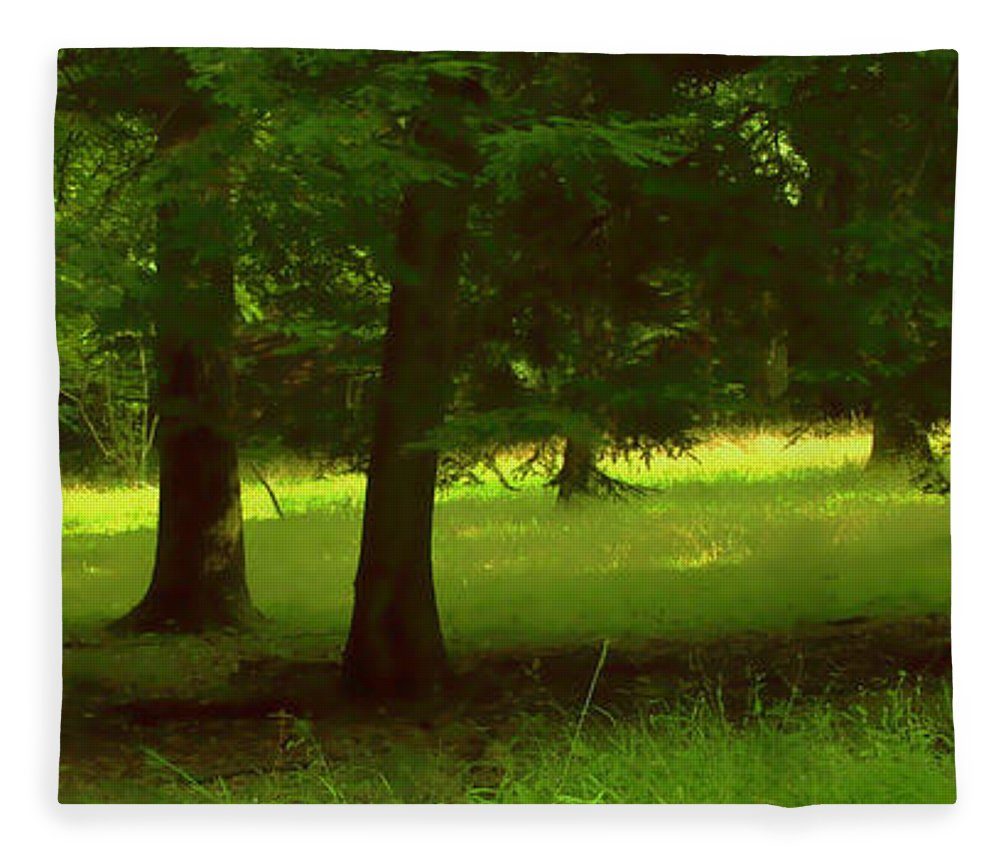 Nature Fleece Blanket featuring the photograph Enchanted Forest by Linda Sannuti