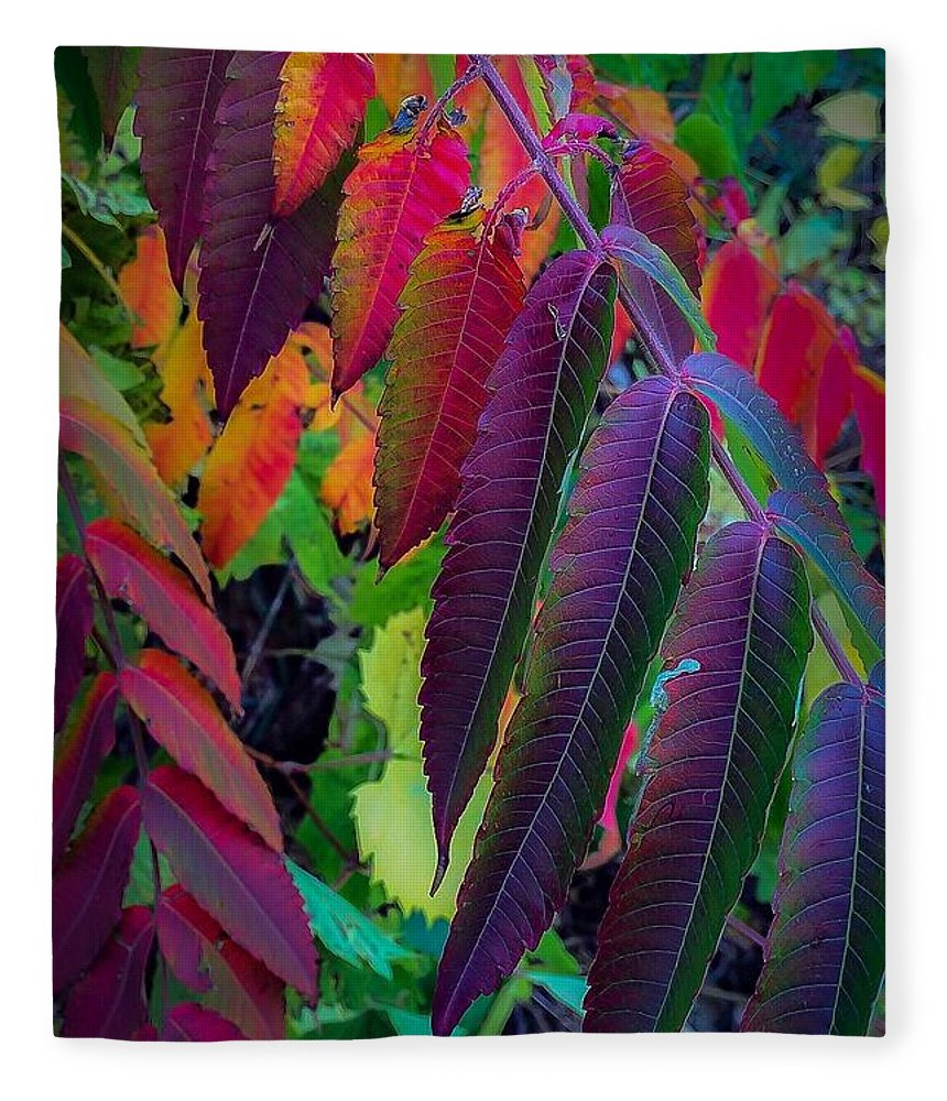 Fleece Blanket featuring the photograph Fall Feathers by Kendall McKernon