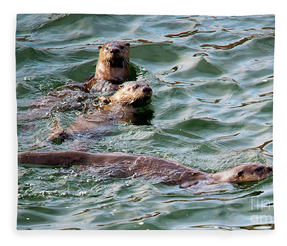Otters Fleece Blanket featuring the photograph Family Play Time by Mike Dawson