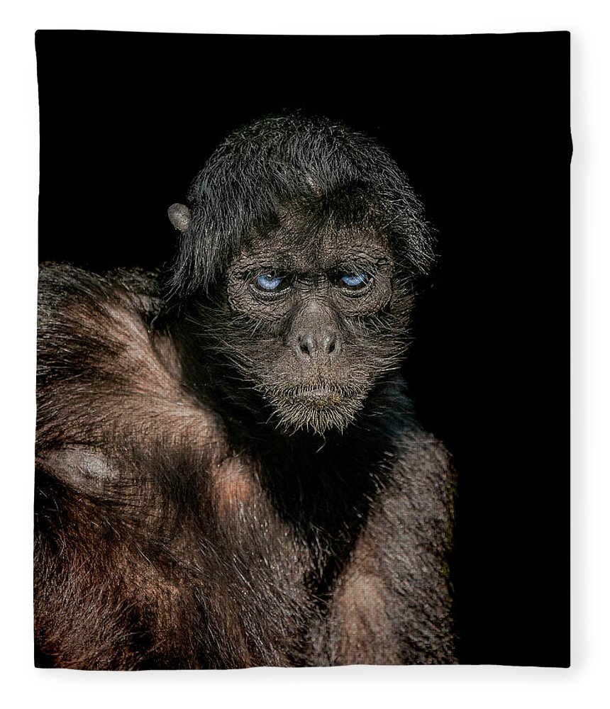 Spider Fleece Blanket featuring the photograph Fearless by Paul Neville
