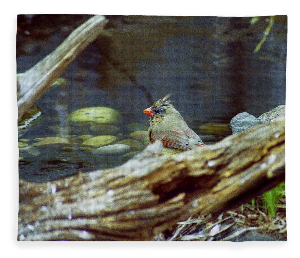 Female Fleece Blanket featuring the photograph Female Cardinal by Michael Peychich