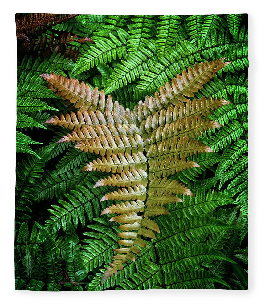 Fern Fleece Blanket featuring the photograph Fern by Chrystal Mimbs
