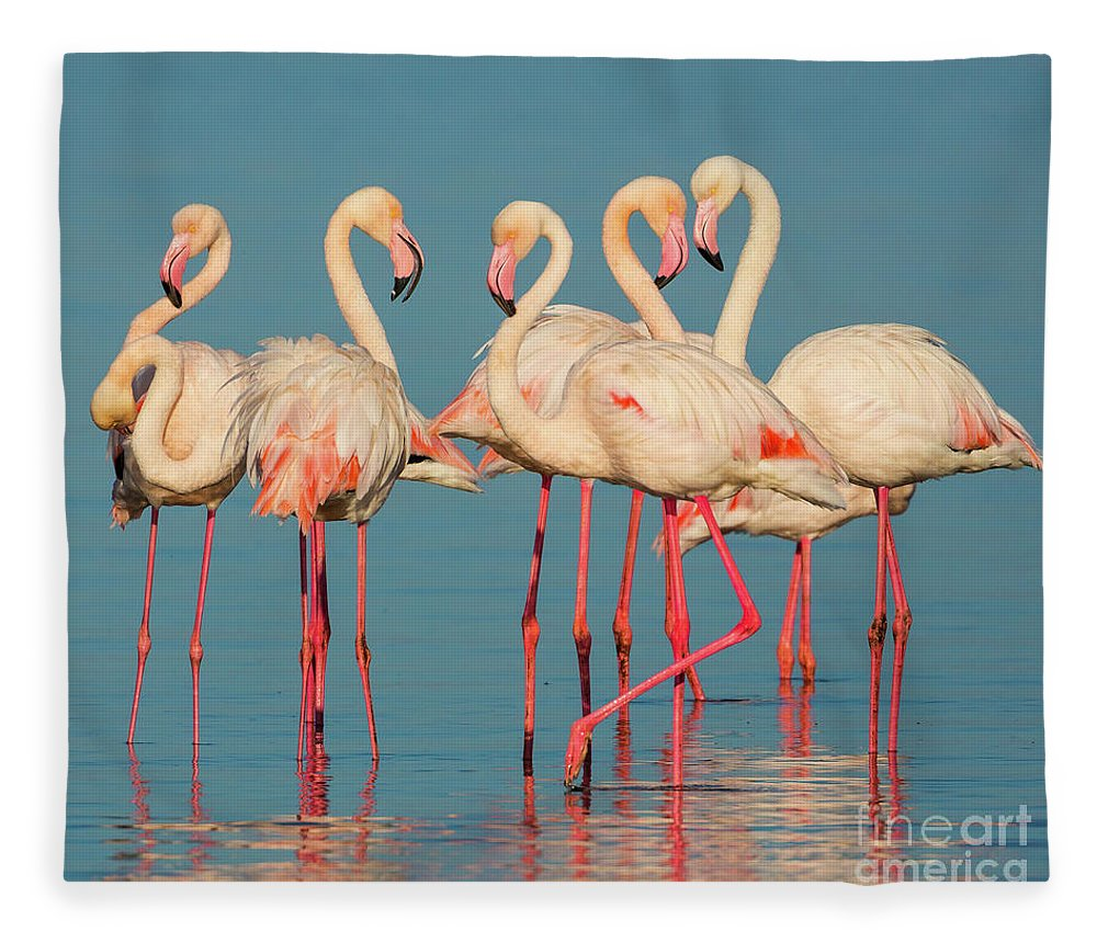 Africa Fleece Blanket featuring the photograph Five Flamingos by Inge Johnsson