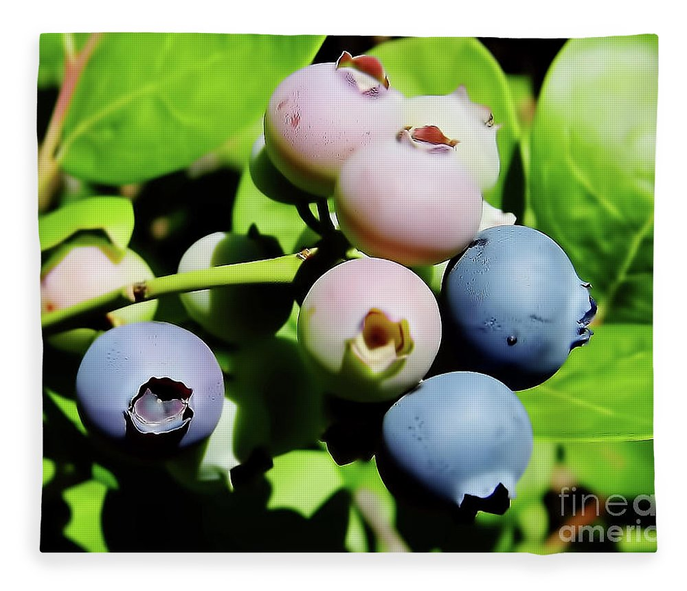 Blue Berries Fleece Blanket featuring the photograph Florida - Blueberries - On The Bush by D Hackett