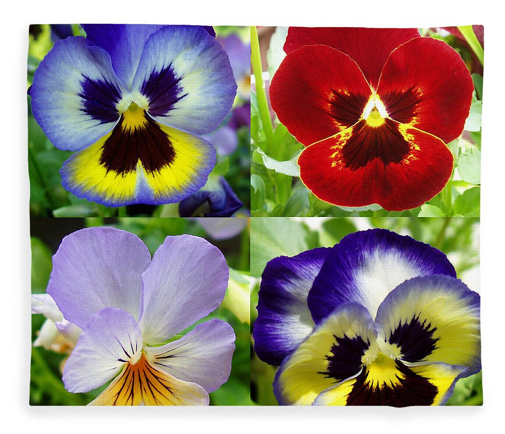 Pansy Fleece Blanket featuring the photograph Four Pansies by Nancy Mueller