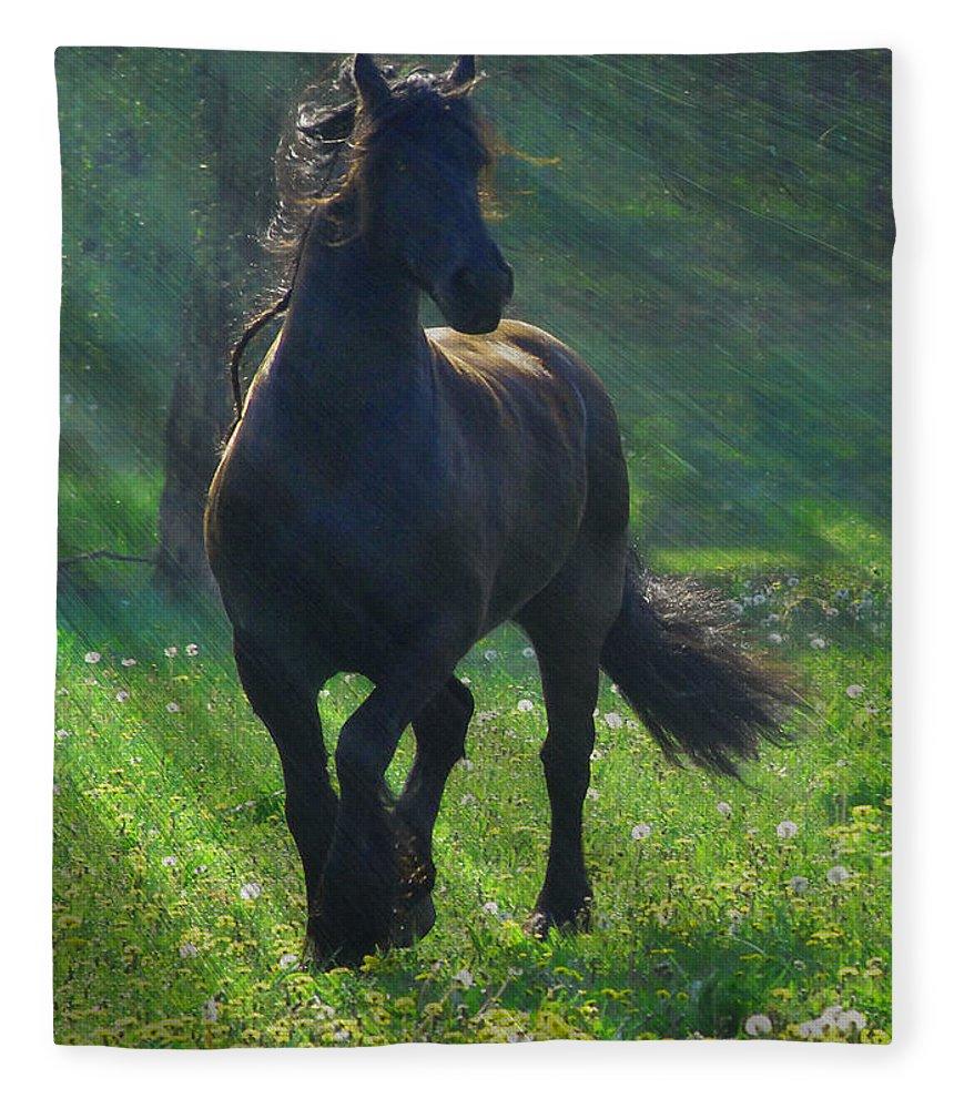 Horses Fleece Blanket featuring the photograph Friesian Sun by Fran J Scott