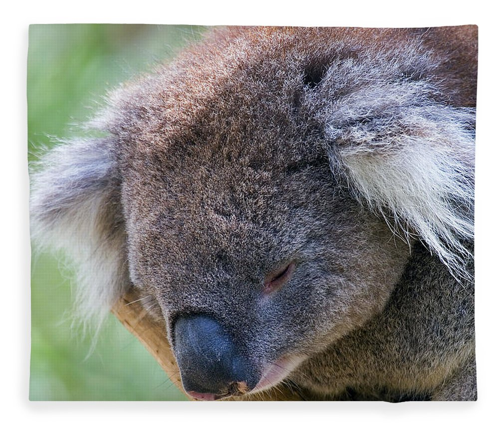 Koala Fleece Blanket featuring the photograph Fuzzy by Mike Dawson