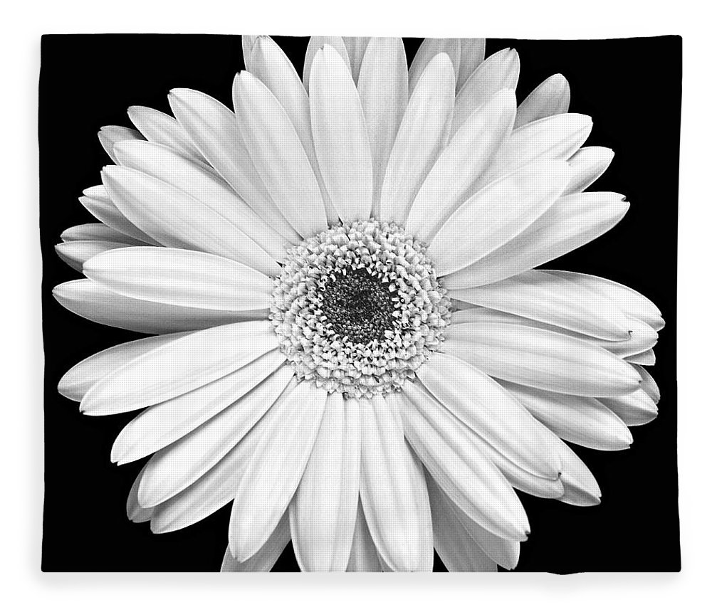 Gerber Fleece Blanket featuring the photograph Single Gerbera Daisy by Marilyn Hunt
