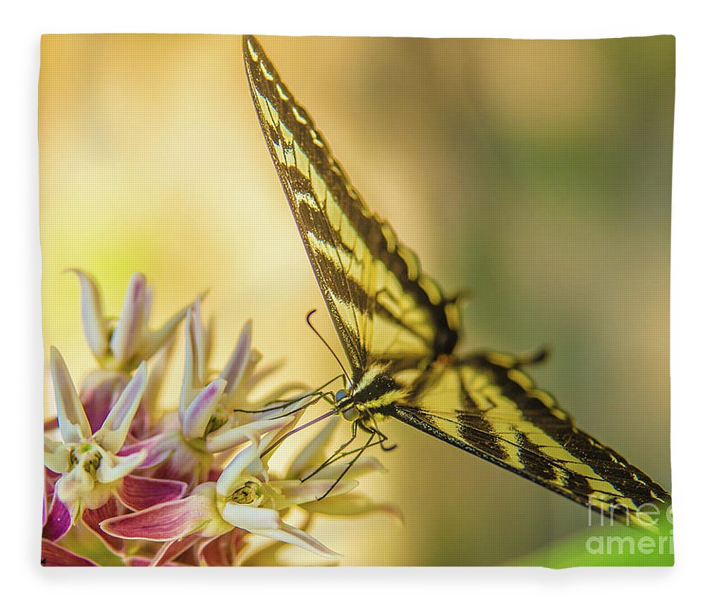 Yosemite Fleece Blanket featuring the photograph Giant Swallowtail With Yosemite Showy Milkweed by Michael Tidwell