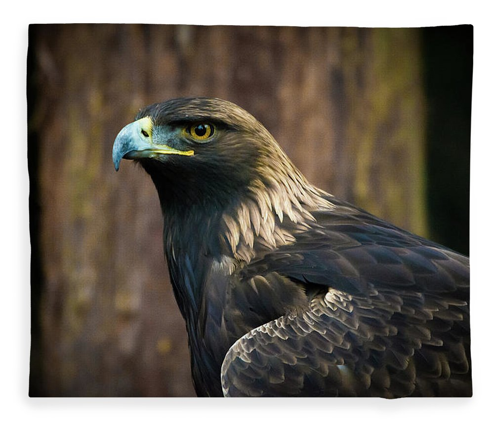 Eagle Fleece Blanket featuring the photograph Golden Eagle 5 by Jason Brooks