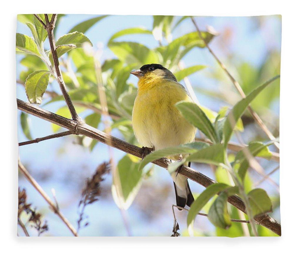 Bird Fleece Blanket featuring the photograph Goldfinch In Spring Tree by Carol Groenen