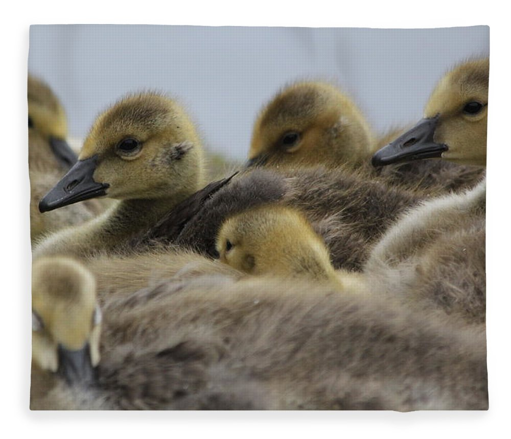 Geese Fleece Blanket featuring the photograph Gosling Gaggle by Lauri Novak