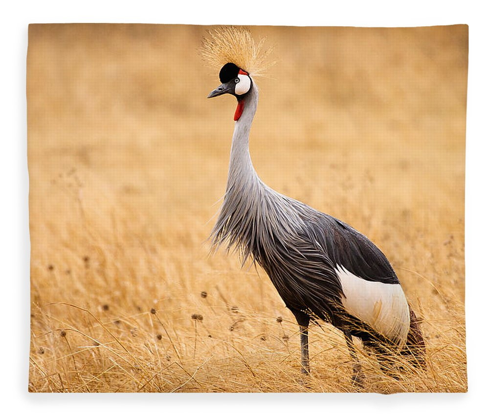 3scape Photos Fleece Blanket featuring the photograph Gray Crowned Crane by Adam Romanowicz