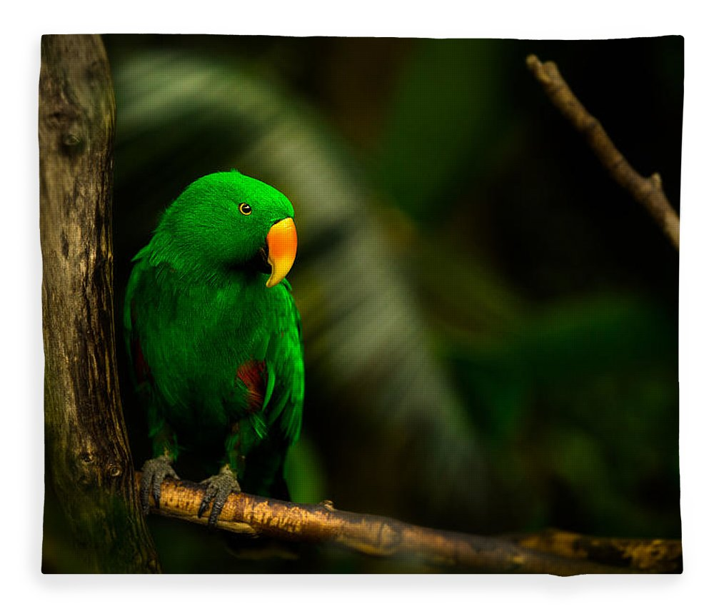 Bloedel Flora Bird Conservatory Fleece Blanket featuring the photograph Green Eclectus Parrot Male by Peter v Quenter