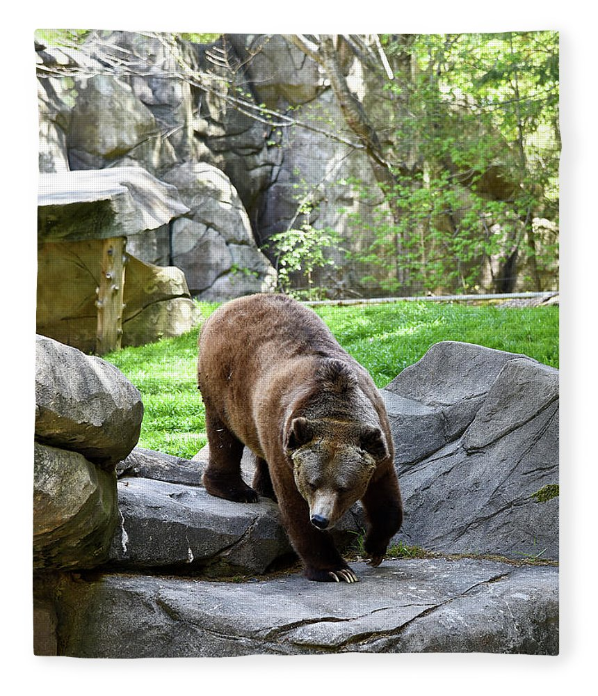 Grizzly Fleece Blanket featuring the photograph Grizzly by Sherri Johnson