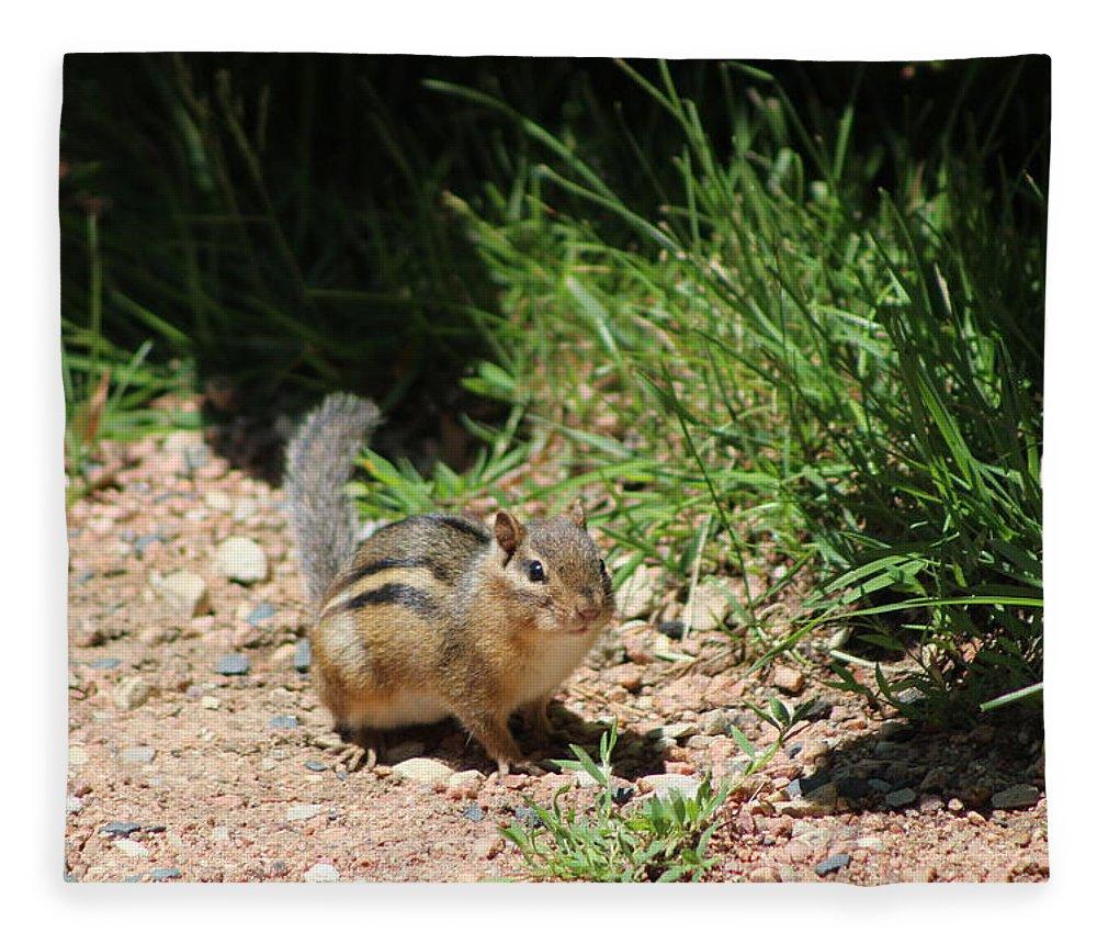 Ground Squirrel Fleece Blanket featuring the photograph Ground Squirrel at Chicago Botanical Garden by Colleen Cornelius