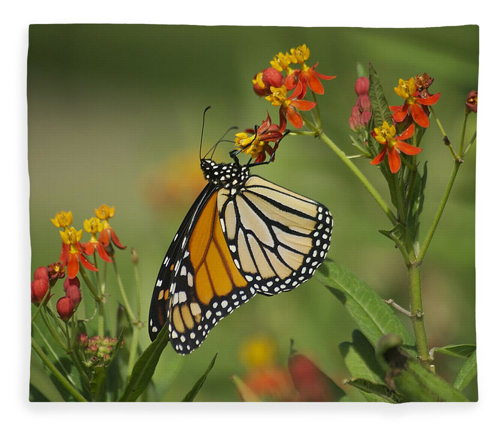 Wildlife Fleece Blanket featuring the photograph Hawaiian Monarch 2 by Michael Peychich