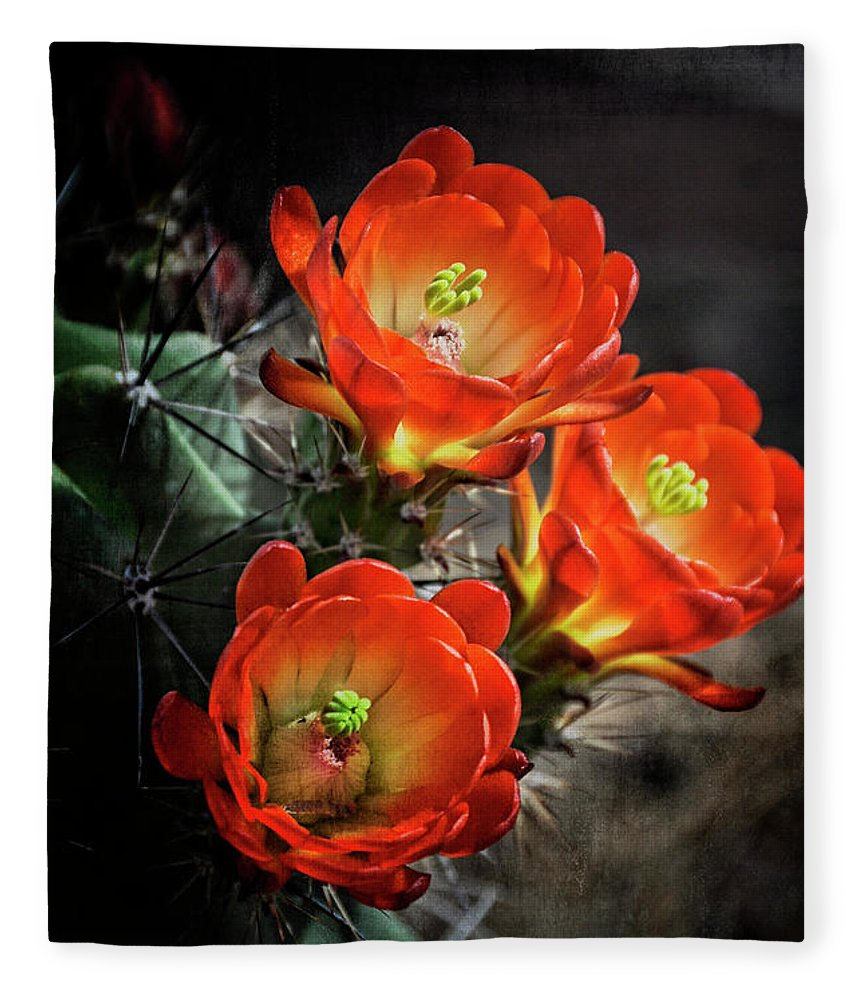 Arizona Fleece Blanket featuring the photograph Hedgehog by Saija Lehtonen