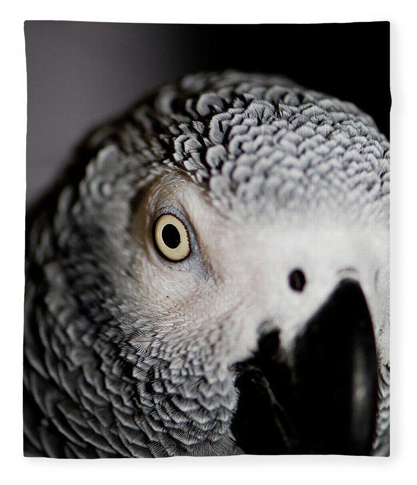 African Gray Parrot Fleece Blanket featuring the photograph Heeere's Bogie by Betty LaRue
