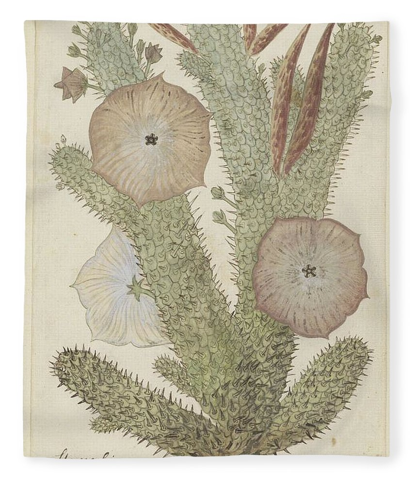 Art Fleece Blanket featuring the painting Hoodia Gordonii, Robert Jacob Gordon, 1777 - 1786 by Robert Jacob Gordon